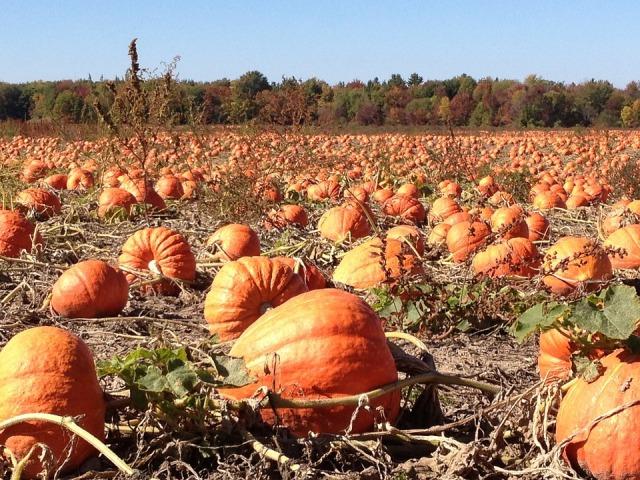pumpkins-92101_960_720